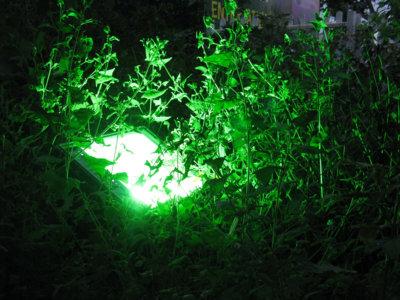 Crean las primeras baterías basadas en la fotosíntesis de las plantas