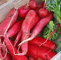 Rábano, un alimento saludable que podemos consumir todo el año