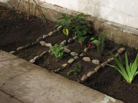 Cultivar verduras y tener tu propio huerto