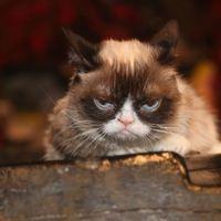 Grumpy Cat, la gata más malhumorada del Internet, falleció a sus siete años