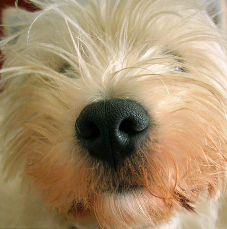 Consejos para fotografiar a tu mascota