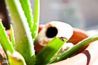 Antihistamínicos naturales para acabar con las alergias de primavera