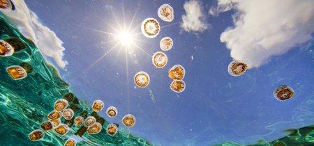 'Lo que sucedió con la medusa', de Ali Benjamin