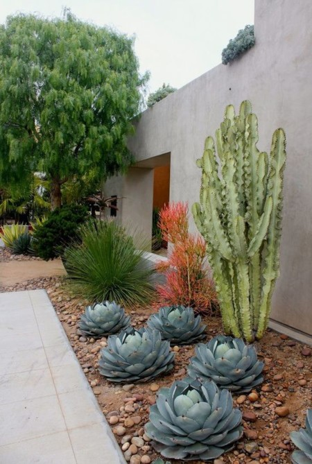 Atr vete con los cactus 15 inspiradoras decoraciones para patios y terrazas - Jardines con cactus y piedras ...