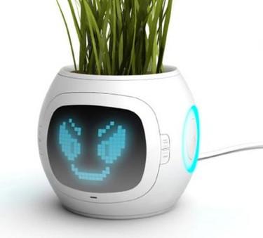 Nunca más te olvidarás de regar las plantas
