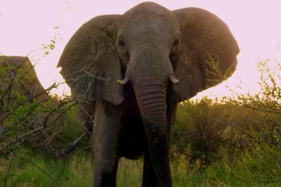 Viaje a Namibia (III) El elefante que me hizo temblar y su hermosa familia