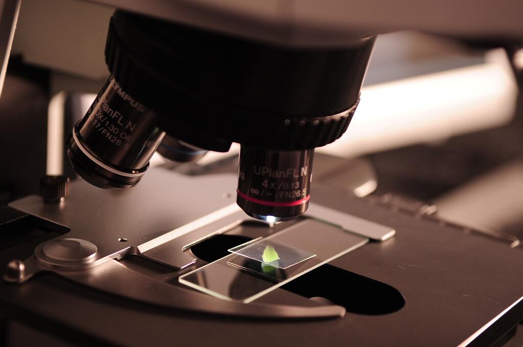 El mayor experimento científico evolutivo realizado hasta ahora nos demuestra que la vida se abre camino a toda costa