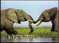 ¿Qué pasa con el tercer elefante?