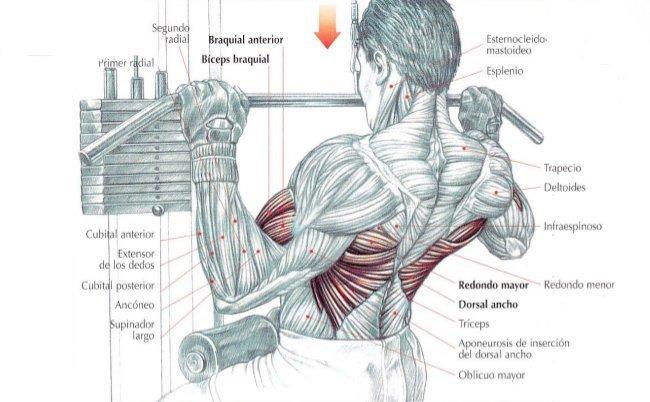 Anatómico implanty los pechos antes y después