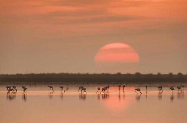 Flamencos Delta Del Ebro 1024x675
