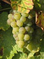 La uva es una fruta de temporada sabrosa y que nos aporta mucha energía