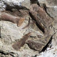 Este esqueleto de tiranosaurio ha aparecido en Utah y está casi completo
