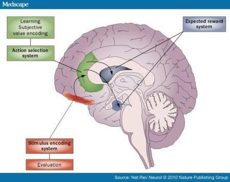 cerebro-1.jpg