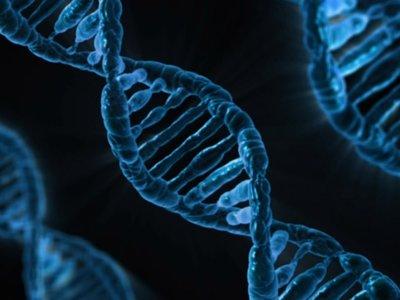 ¿Cuántos datos podríamos almacenar usando nuestro ADN? Miles de veces más que en un disco duro
