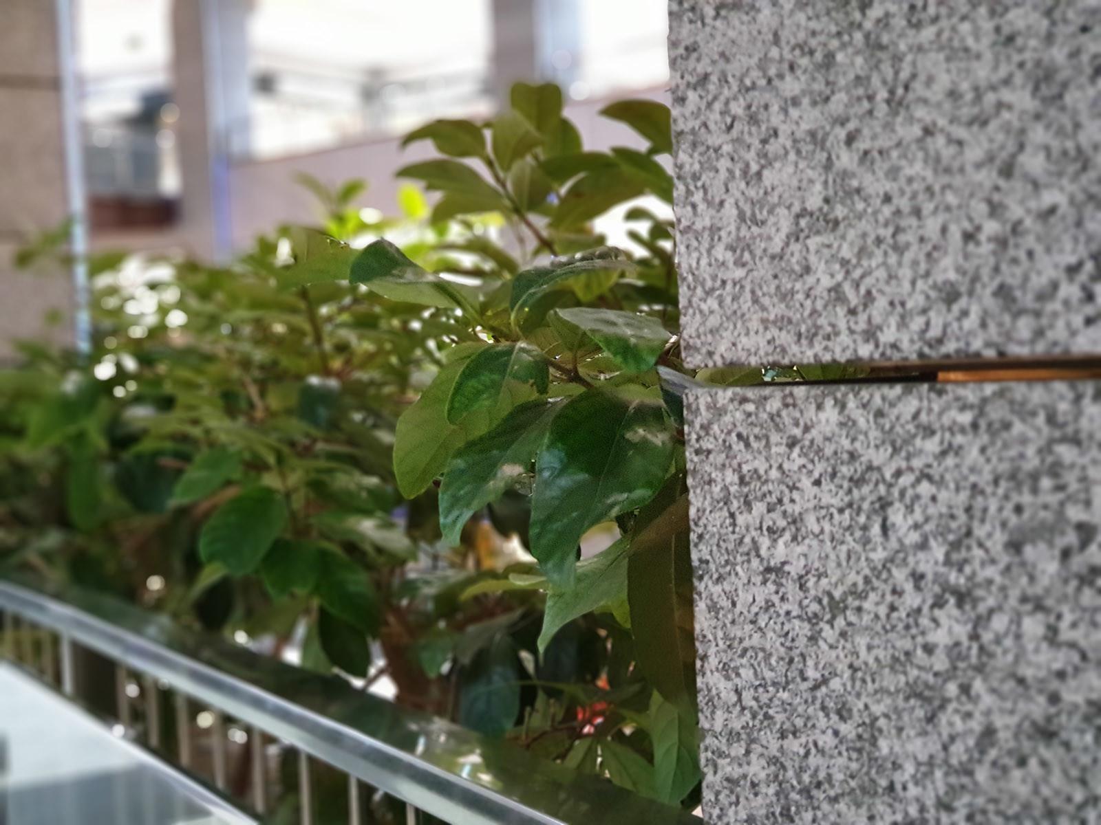 Foto de Samsung Galaxy Note 9, modo retrato (16/19)
