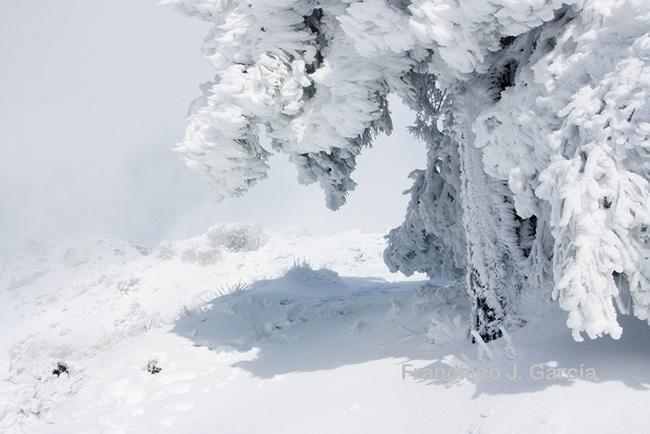 Tan blanco como la nieve de enero, por Francisco J. García
