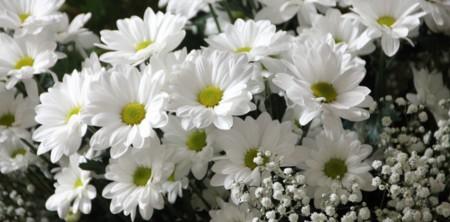 Flor24