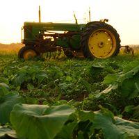 Los Gobiernos de todo el mundo distorsionan la agricultura con sus ayudas