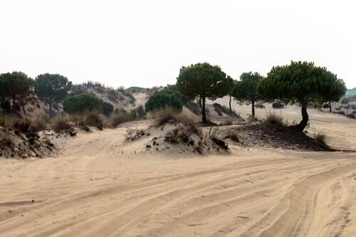 Visitar el Parque Nacional de Doñana: tres itinerarios que enamoran