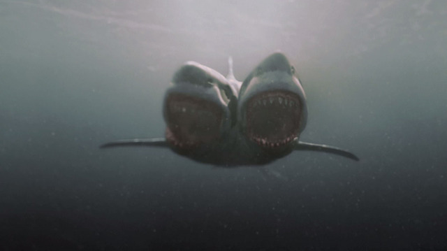 tiburondoscabezasf1