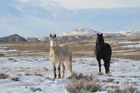 Horses 1613251