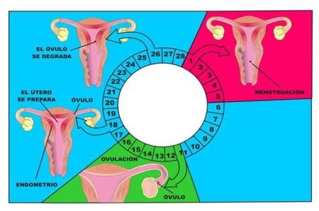 168771 Net Menstruaci