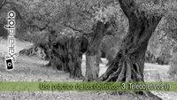 Uso práctico de los objetivos: 3. Teleobjetivos (I)