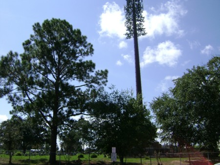 Disguised Cell Tower In Sunset Hill Cemetery