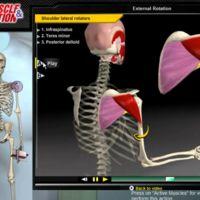 Todo sobre el hombro (II): Biomecánica