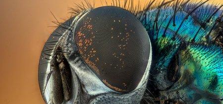 Los ojos de los insectos tienen mayor resolución de lo que se creía