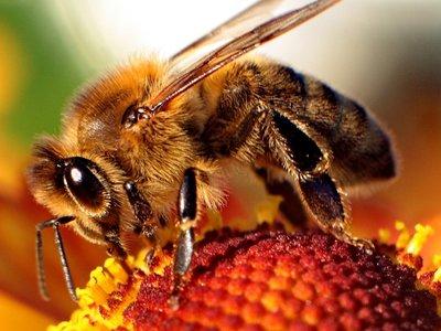 Los pesticidas sí pueden estár acabando con las abejas y lo prueban estudios de sus propios fabricantes