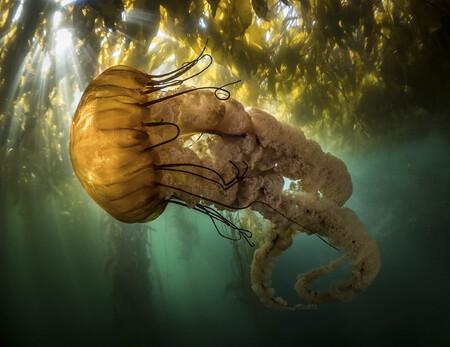 Ocean Photo awards
