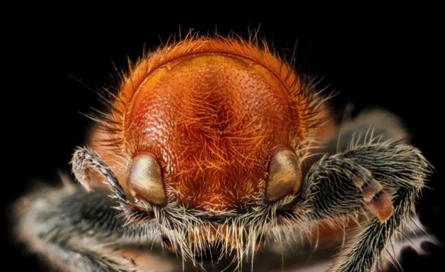 La fotografía de insectos puede ser tan bella y espectacular como la que más