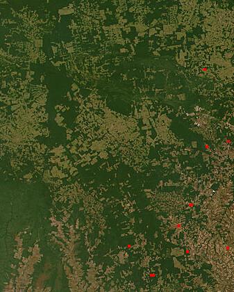 Deforestationinbrazil2