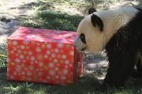Estas Navidades ven al campamento del Zoo Acuarium de Madrid