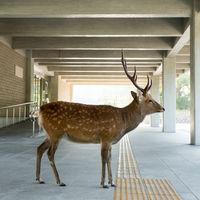 'Planet Deer', de Yoko Ishii, cuando los ciervos se convierten en los amos de la calle y toman la antigua capital de Japón