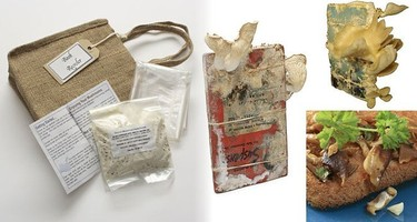Grow Your Own Oyster Mushrooms, setas que nacen de los libros