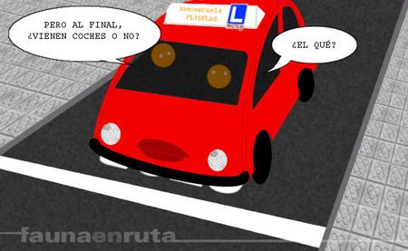 fauna en ruta: decisiones al volante