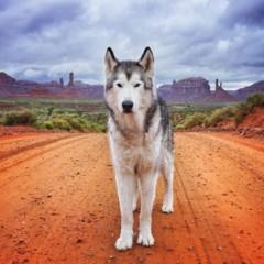 Foto 2 de 9 de la galería loki-the-wolfdog en Diario del Viajero