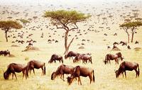 Paco Nadal: La Fotografía como algo mejor que hacer en Botswana sin matar elefantes