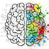 El cerebro de hombres y mujeres es incluso más diferente antes de nacer