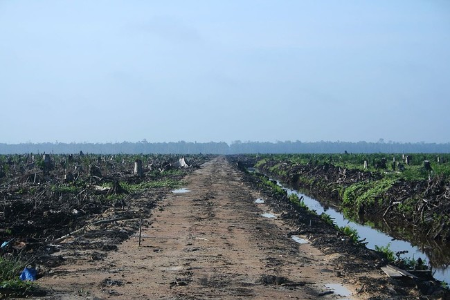 Riau Palm Oil 2007