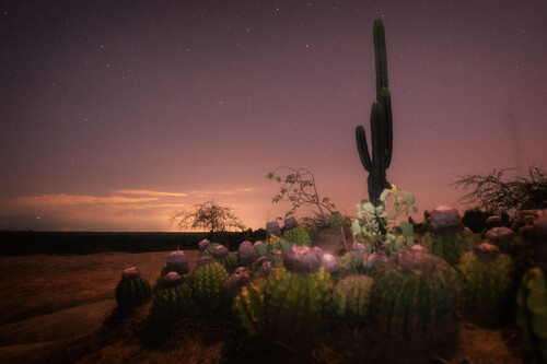 'Noche en el desierto de la Tatacoa': cómo realizar una imagen ganadora de premios desde la visión de una ganadora nacional de los WPA