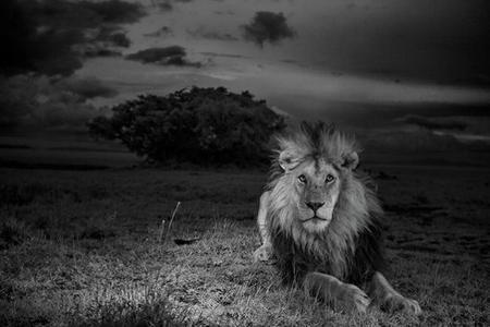 Los premios POYi de fotografía ya están en plena «ebullición». Y lo que queda...