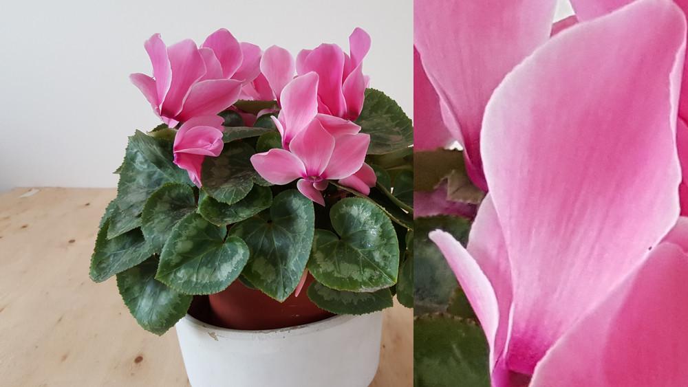 S6 Edge Flor