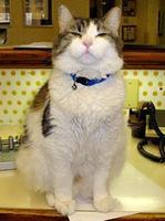 Oscar, el gato que detecta la muerte