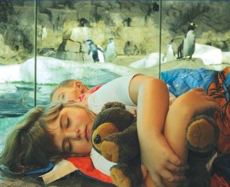 ¿Queréis llevar a vuestros peques a dormir con los pingüinos a Faunia?