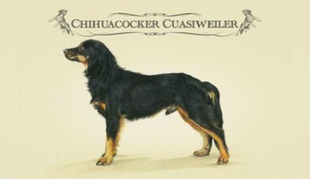 Chihuacocker Cuasiweiler