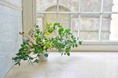 Tendencias en plantas: ¿qué se lleva?