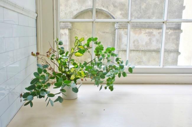 Tendencias en plantas qu se lleva for Jardin vertical verdecora